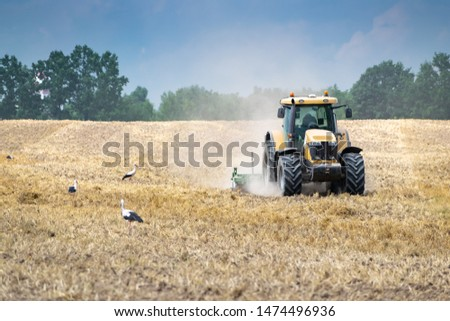 Tractor cultivating the field after harvesting accompanied by the storks