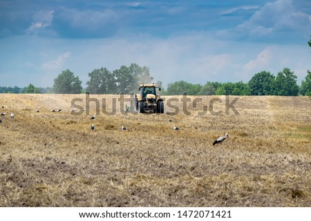 Tractor cultivating the field after harvesting with storks walking around