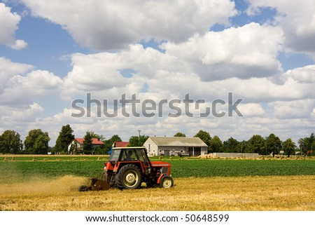 Tractor harvesting wheat field in summer day