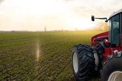 Tractor in a spring wheat field.