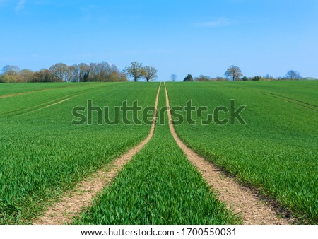 Tractor marks left in a field of newly sown crops. Perry Green, Much Hadham, Hertfordshire. UK