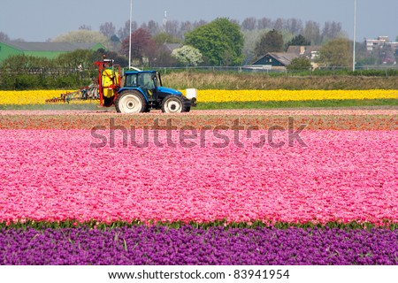 Tractor spraying water in a tulipfield in Holland