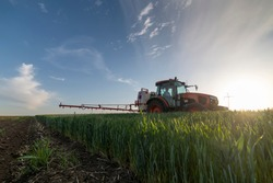 Tractor spraying wheat in springtime in field