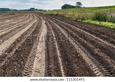 Tractor tracks in a potato field just after harvesting.
