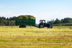 Tractor with a trailer filled with freshly cut grass. Hay making, grassland. General plan, panorama. Copy space.