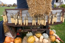 tractor with corncobs and pumpkins halloween style