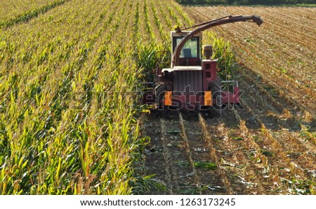 Tractor with thresher machine in a middle of  a maize field, half harvested.