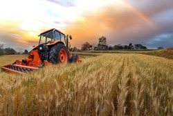 Tractor working on the  rice fileds barley farm at sunset time, modern agricultural transport.