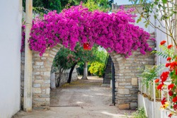 Traditional Aegean style white houses, colorful streets and bougainvillea flowers in Bodrum city of Turkey. White colored architecture in Bodrum town Turkey.