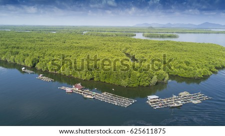 Traditional Asian fish farm (aquaculture) in Thailand. Aerial view. Mangrove swamp forest in background