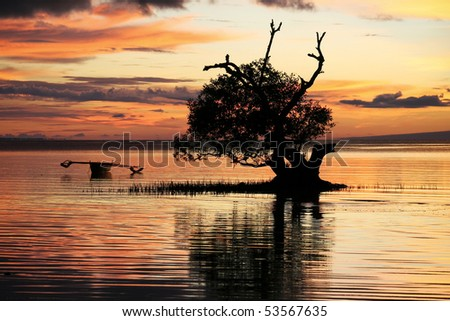 traditional banka outrigger boat in mangroves backlit by sunset, siqijour island, the philippines
