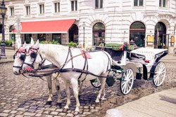 Traditional carriage of two white horses on the old street in Vienna, Austria