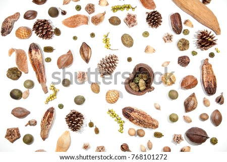 Traditional Christmas card background image. Pine cones berries seeds and nuts. Selection of festive Victorian forest decorations isolated on white background for cutting out individually or card