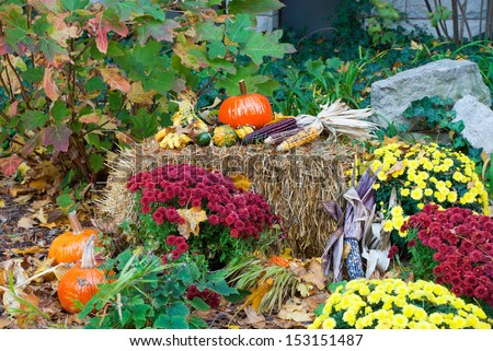Traditional composition for the holiday Halloween with pumpkins, corn and straw,  Chicago, Illinois