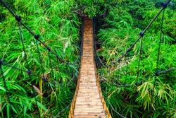 Traditional construction suspension pedestrian bridge made from natural bamboo. Cable bridge crossing river in tropical jungle. Footbridge over treetops and green bamboo thickets