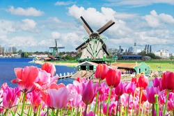 traditional Dutch windmills of Zaanse Schans over water at spring, Netherlands and flowers