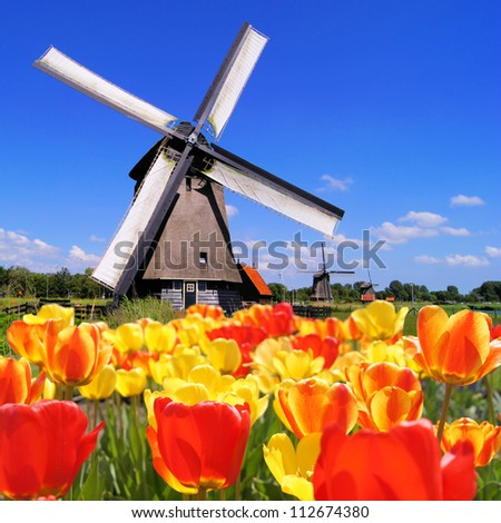 Traditional Dutch windmills with vibrant tulips in the foreground, The Netherlands Stock photo ©