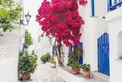 Traditional greek street with bougainvillea flowers in Paros island, Marpissa village, Cyclades, Greece