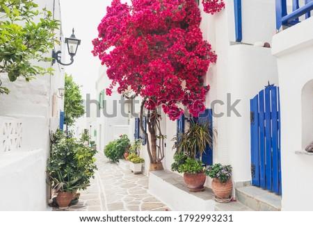 Traditional greek street with bougainvillea flowers in Paros island, Marpissa village, Cyclades, Greece Foto d'archivio ©