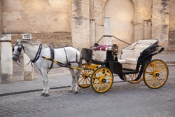 Traditional horse and carriage in front of Cathedral Santa Maria de la Sede in Seville, Andalusia, Spain.