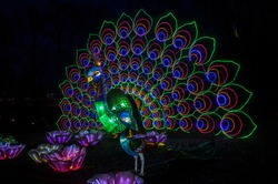 Traditional lamps from China's Lantern Festival. Street light-up feature sculpture of peacock