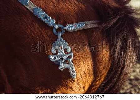 Traditional Mongolian horse harness close-up on a horse.