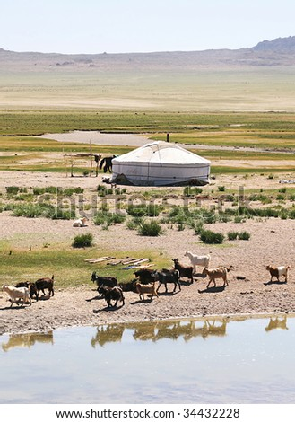 Traditional mongolian landscape. Herd of goats on the  lake bank