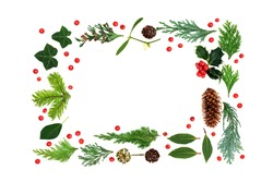 Traditional natural winter flora background border for Christmas & New Year flora with holly, loose berries, ivy, mistletoe, firs & pine cones on white. Eco friendly composition for the winter season.