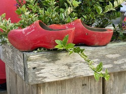 Traditional old  Dutch wooden shoes stand on a wooden stand with a green flower. Shoes look old and unusual which is attractive to tourists in Amsterdam. Interesting design of red shoes