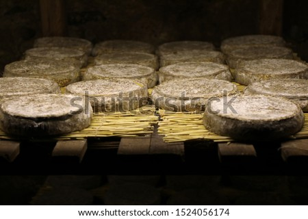 Traditional refining of Saint-Nectaire cheeses in a cellar. Puy-de-dome, Auvergne, France