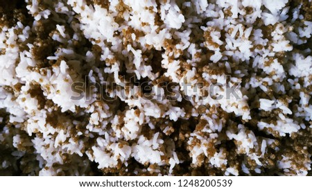 Traditional Rice, Traditional Food, Traditional Asian Food, Traditional Indonesian Food #1248200539