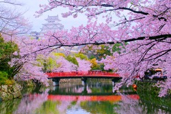 Traditional Scenery of Beautiful Japanese Elegance Style is Shiromidai Park & Himeji castle(Himejijo), Bridge, Pond, Shachihoko Statue, Main Tower(Tenshukaku) and Cherry Blossoms On Cloudy Day.