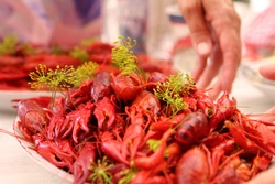Traditional swedish crayfish, lobster and crab party dinner
