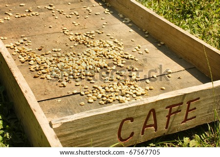 Traditional system of drying the coffee in the sun. Colombian Green Coffee. Salento, which is nestled between mountains of the Cordillera Central, in Colombia. Zone of high quality coffee, - stock photo