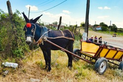 Traditional tourist attraction in the Bulgarian village - funny donkey rides