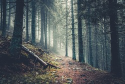 Trail in a dark pine forest on the slopes of the mountain. Carpathians, Ukraine, Europe. Beauty world. Vintage filter