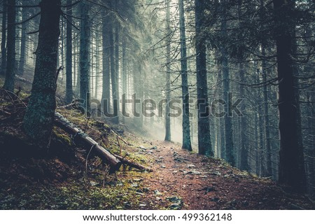 trail in a dark pine forest on...