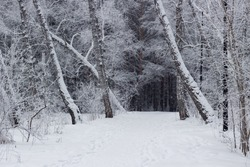 Trail in a snowy forest. Winter landscape in Siberia