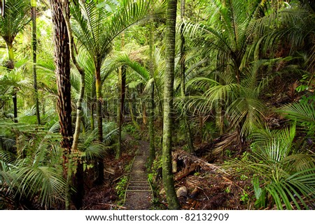 Trail in a tropical forest