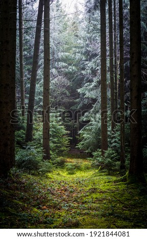 Trail in deep forest scene. Forest trail. Fairy forest trail. Trail in forest