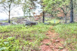 Trail in forest leading to Little Round Top in Gettysburg battlefield national park with grave stones during summer