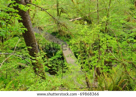 trail in hoh rain forest in olympic national park, washington, usa