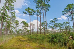 Trail in Jonathan Dickinson State Park