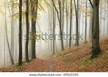 Trail in misty autumn forest. Photo taken in the mountains of Central Europe.