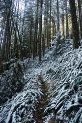 trail in oregon snowy forest