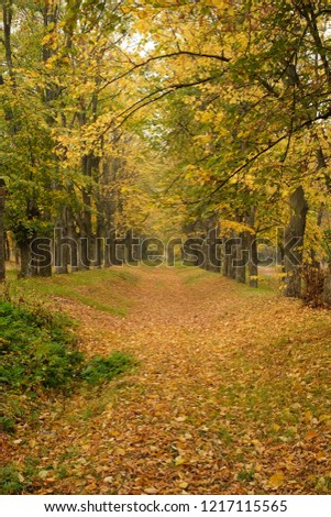 Trail in the autumn forest, autumn road