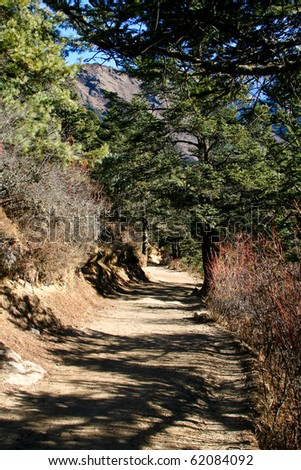 Trail in the forest of a Sagarmatha National Park, Everest region, Nepal. - stock photo