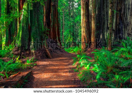 Trail in the Redwoods, Redwoods National & State Parks, California