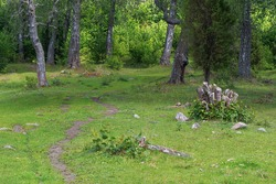 Trail made by cows in a green lush forest. Sweden