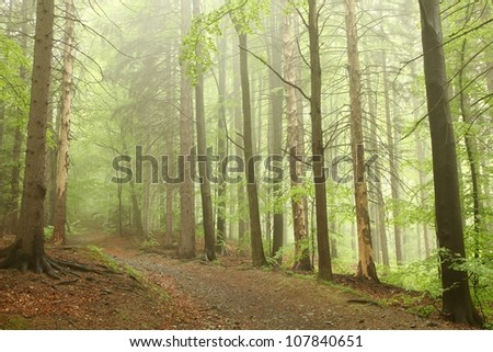 Trail on the border between coniferous and deciduous trees.